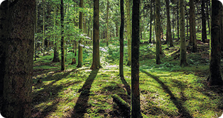350 de milioane de euro pentru biodiversitate