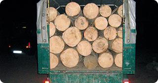 35.000 de metri cubi de lemne au fost confiscaţi în şase luni