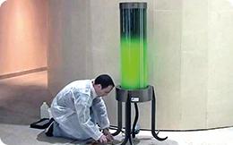 Alge utilizate la purificarea aerului