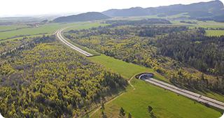 Autostrada A1 este un pericol pentru urși și oameni