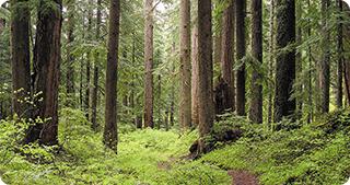 Noi suprafețe de păduri virgine inventariate