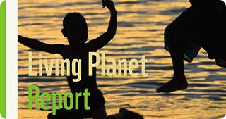 Raport WWF: Populațiile globale de specii de vertebrate au scăzut în medie cu 60% în 40 de ani