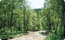 500.000 de hectare de păduri nerecunoscute pot fi distruse oricând