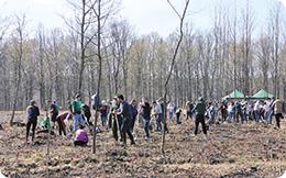ECOTIC:  acțiunea de împădurire a ajuns la a șaptea ediție