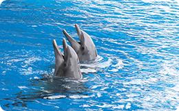 Recensământul delfinilor
