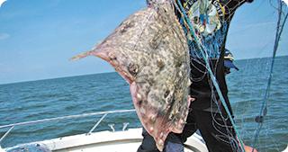 Pescuitul la calcan se va face cu plase monofilament