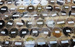 O impresionantă colecție de semințe și gene de plante