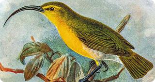 OMUL este principala cauză a dispariției speciilor