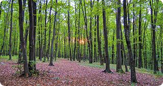 ONG-urile de mediu vor putea verifica pădurile