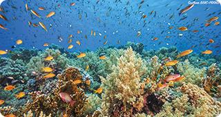 Apa oceanelor și mărilor este tot mai acidă, iar multe specii sunt în pericol