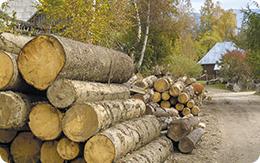Tăierile ilegale de lemn vor fi aspru pedepsite