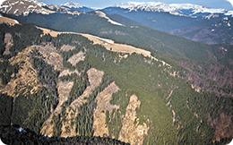 1.400 de arbori furați cu complicitatea pădurarului